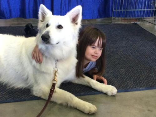 Berger Blanc Suisse Therapy Dog